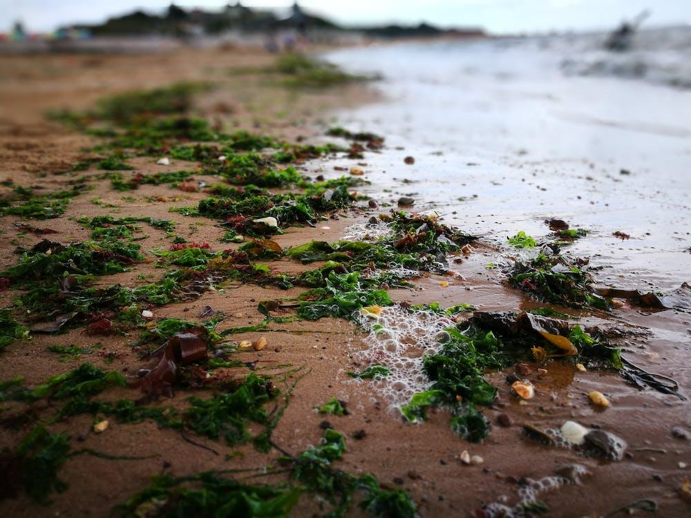 浪潮, 海灘, 砂