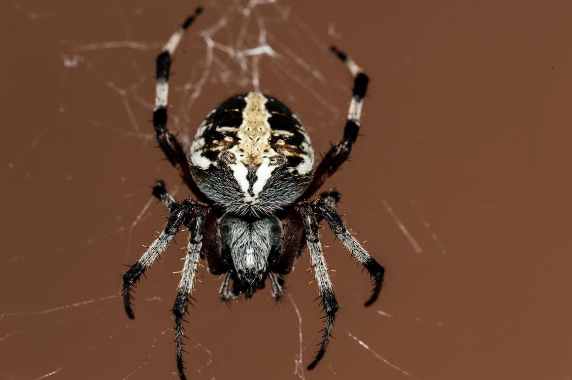 detailný záber, hmyz, pavučina