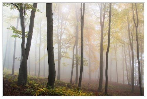 나무, 랜드마크, 박무, 숲의 무료 스톡 사진
