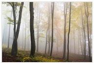 nature, landmark, forest