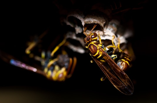 Nature wallpaper of nature, insects, macro, close-up