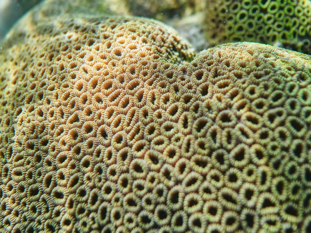 Yellow and Black Coral Reef