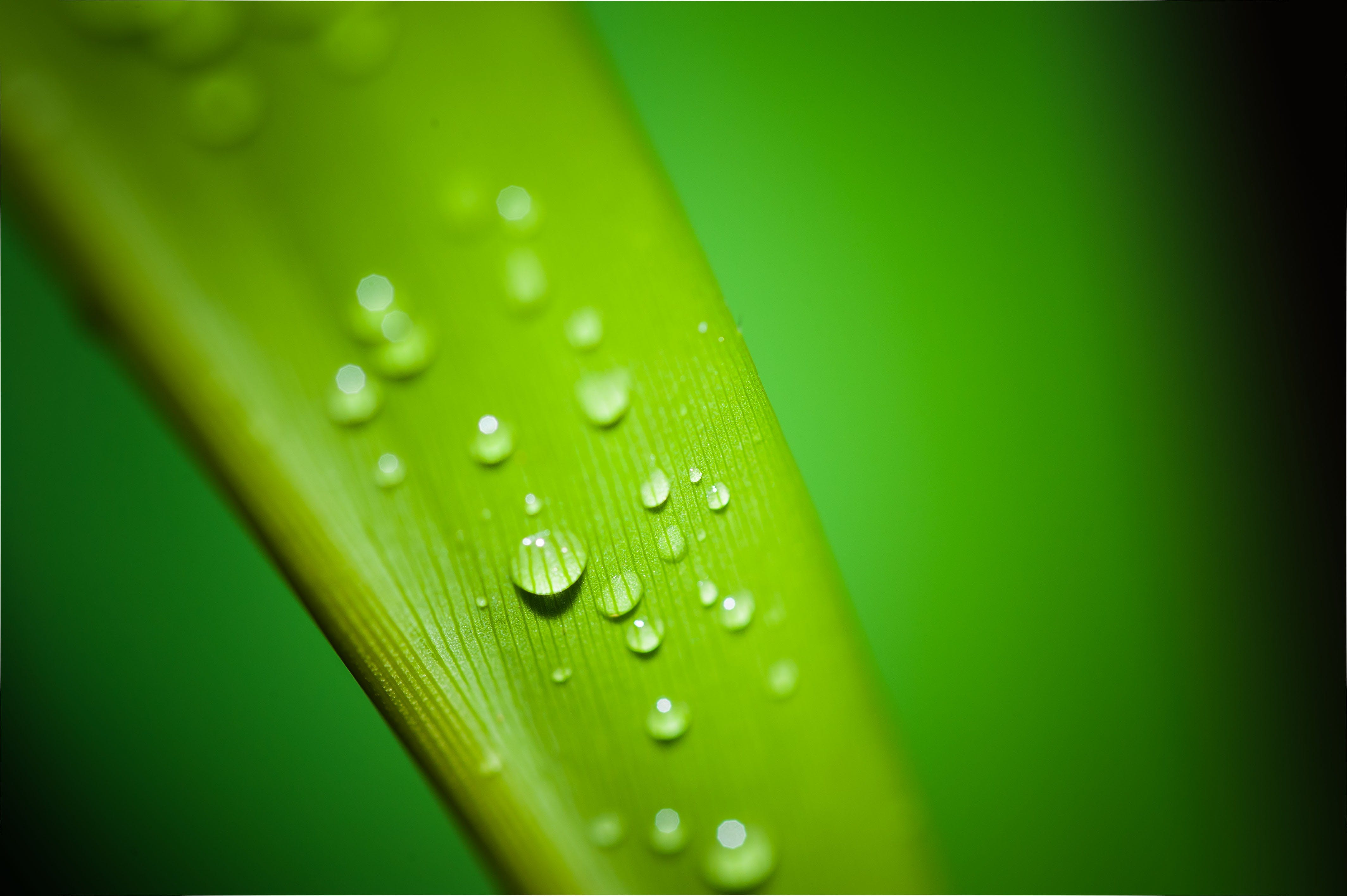 Green Leaf With Water Droplets