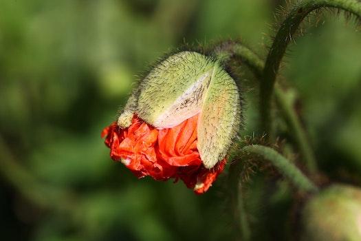 Red Flower Tilt Shift Lens Photography