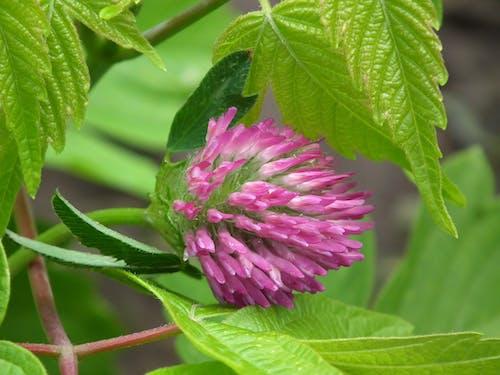 Foto profissional grátis de broto, flor, flora, natureza
