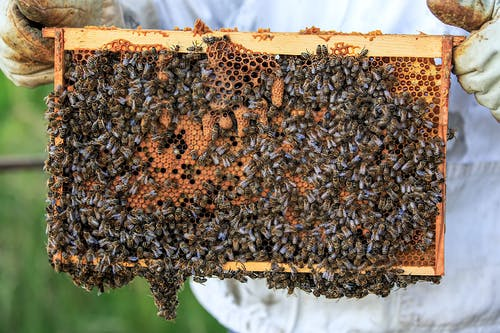 A Swarm of Honey Bees on a Beehive