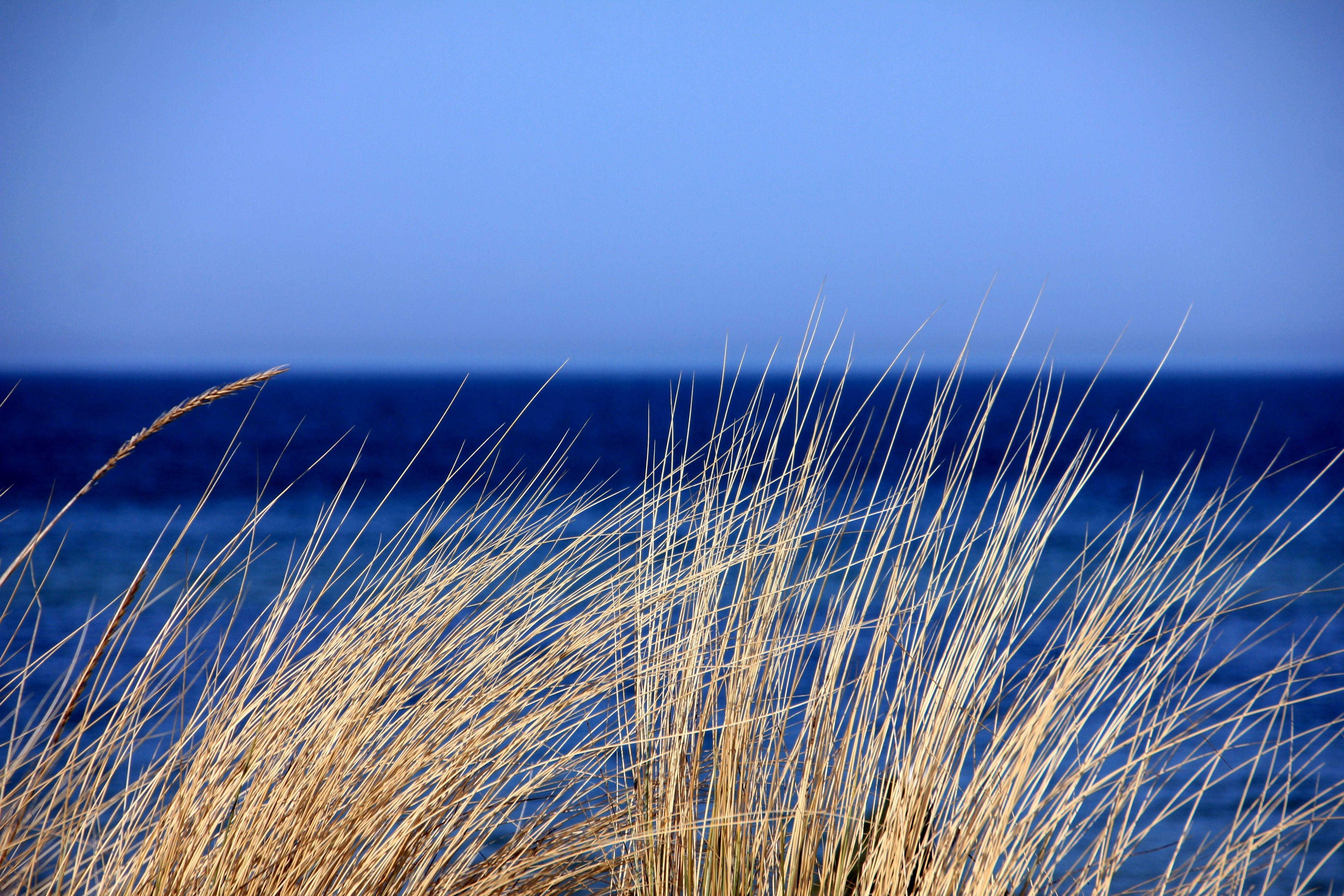 Brown Grass Near Calm Water