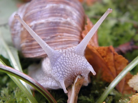 Brow and Purple Snail on Green Grass
