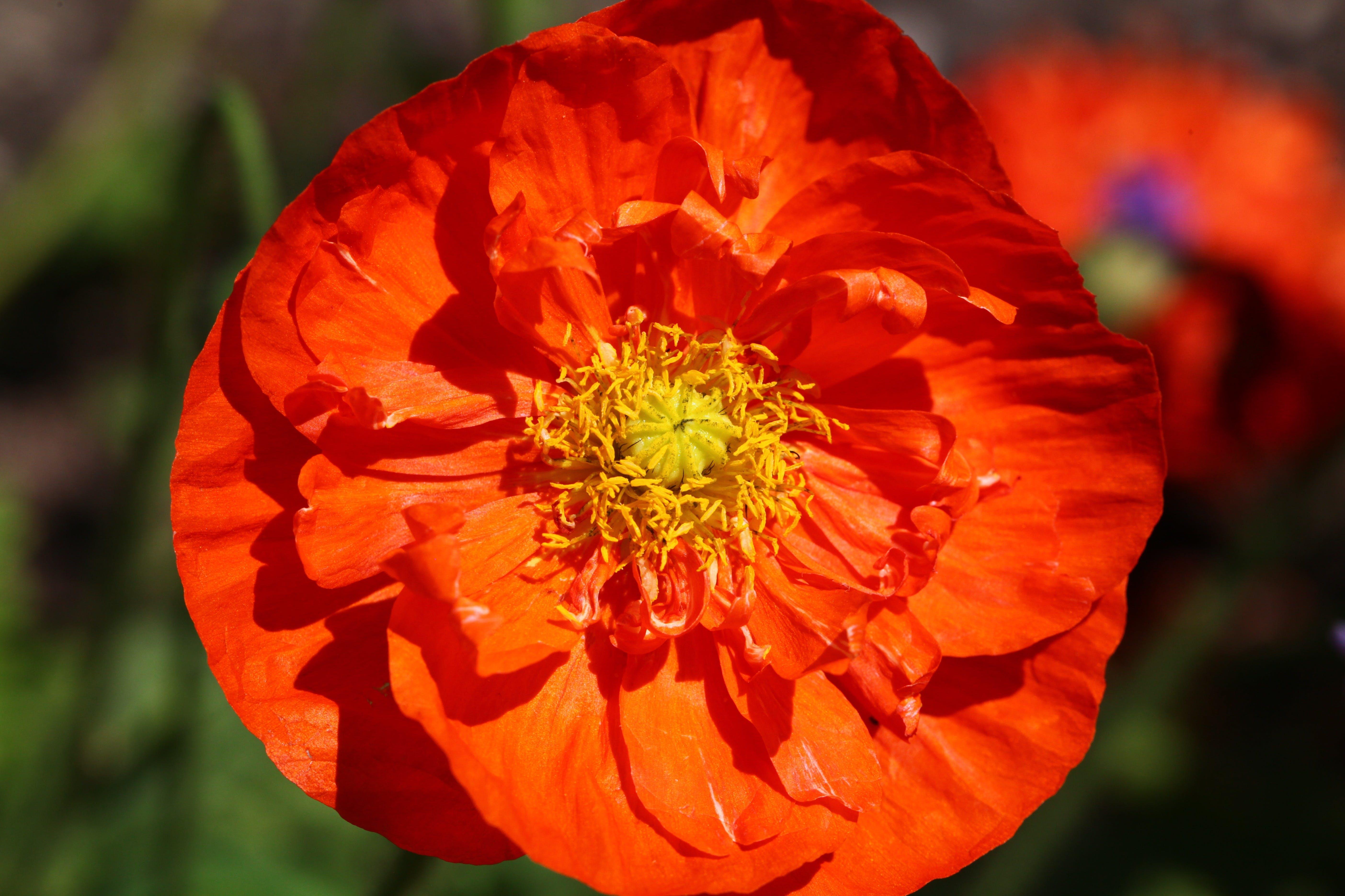 Orange Flower With Yellow Petals