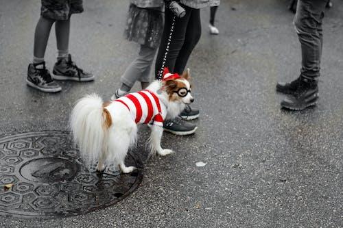 可愛的狗, 寵物, 打扮 的 免費圖庫相片