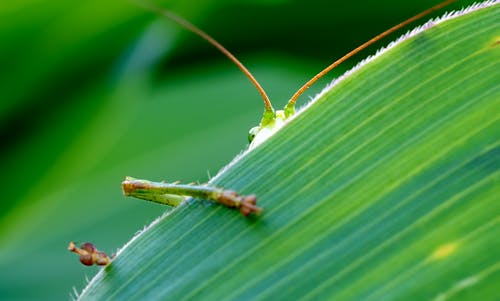 Green Insect Behind Green Leaf