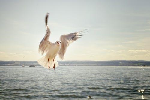 Základová fotografie zdarma na téma létání, moře, oceán, racek
