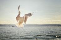 sea, bird, flying