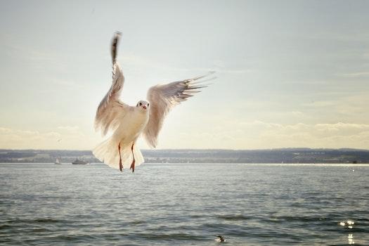 White Bird Bodies of Water Under Gray Sky