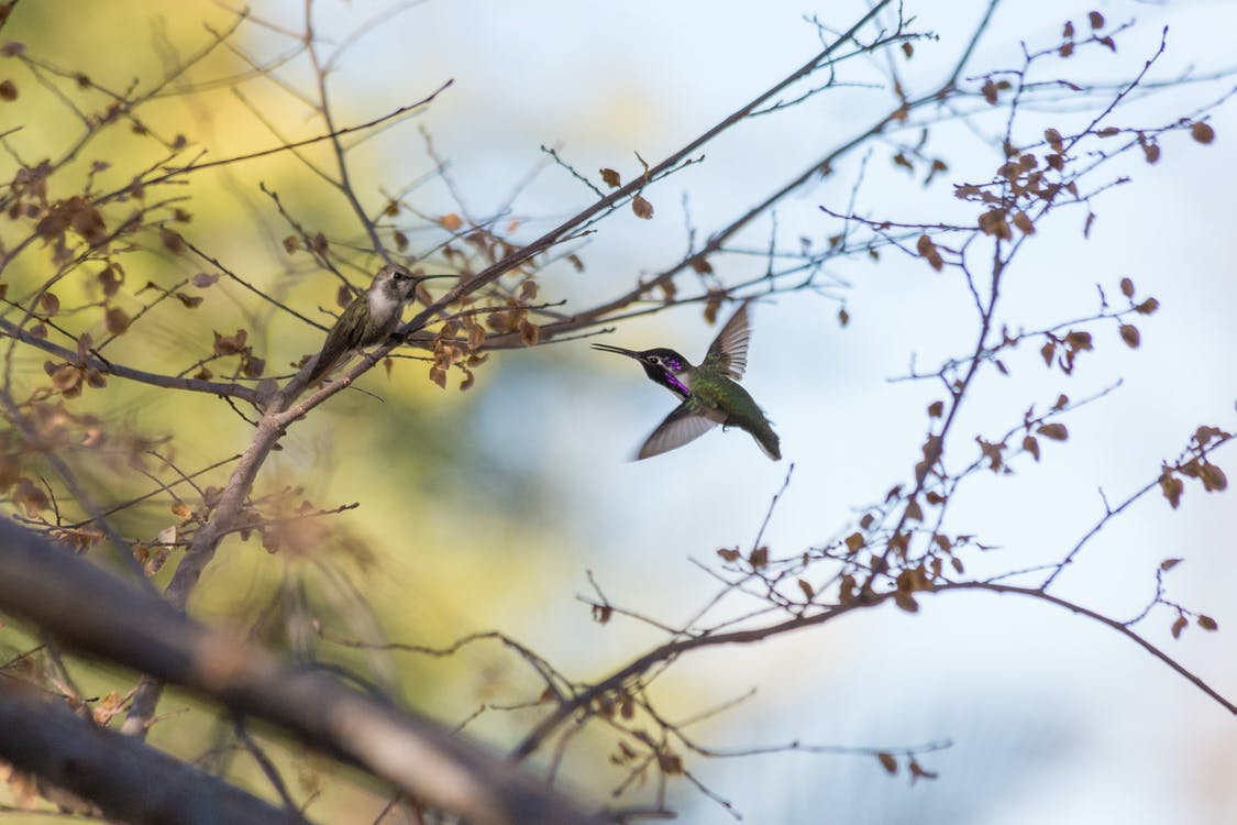 Green and Black Bird on Brown Tree Branch
