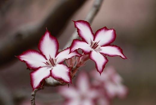 Blumenbilder  Pexels  Kostenlose Stock Fotos