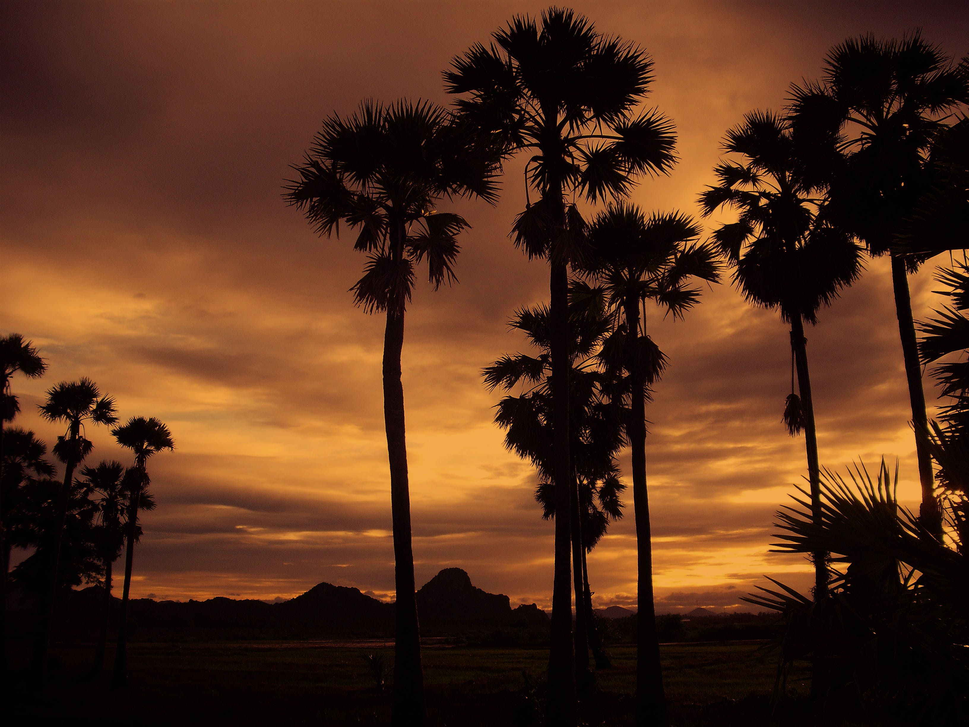 Silhouette of Coconut Tree during Cloudy Day