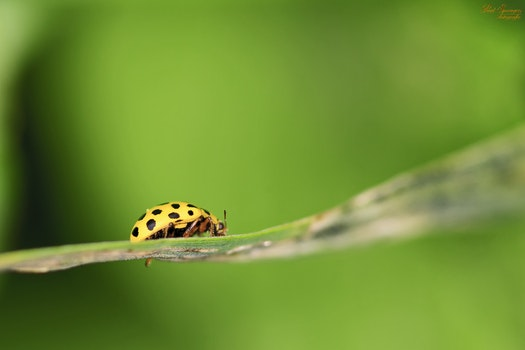 Green Lady Bug on Plant Leaf