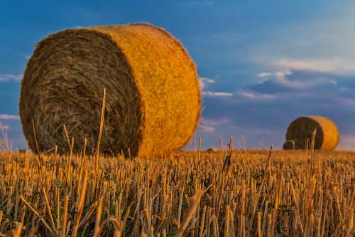 Ilmainen kuvapankkikuva tunnisteilla heinäpaalit, kenttä, makro, niitty
