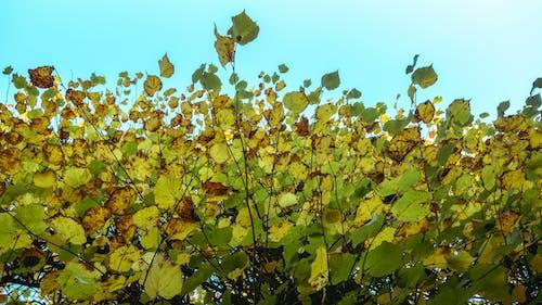 Foto d'estoc gratuïta de arbres, branques d'arbre, cel, cel clar