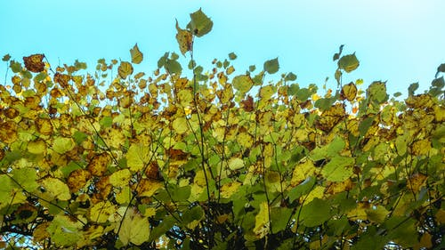 Free stock photo of clear-sky, foliage, life, plants