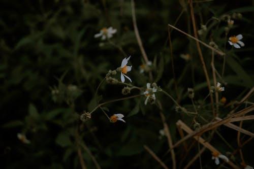 Безкоштовне стокове фото на тему «loifotos, прекрасна квітка, ретро, темному тлі»