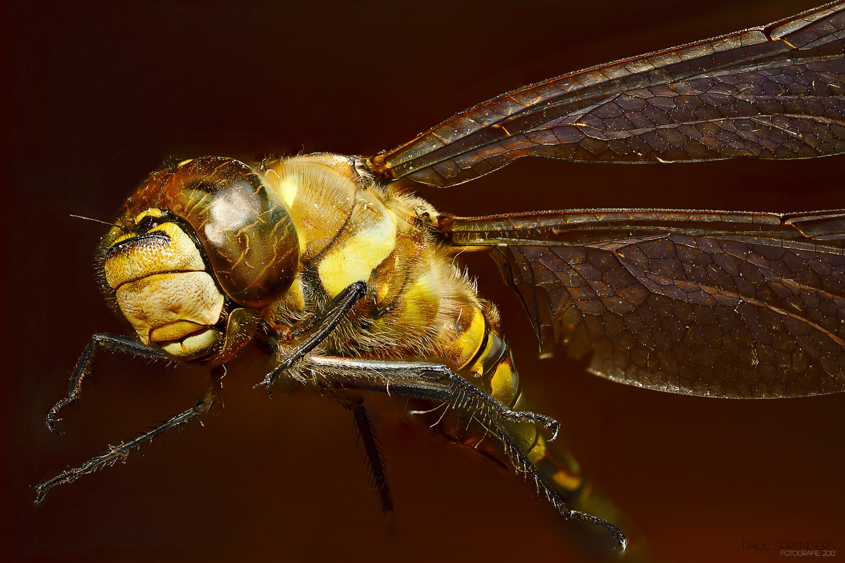 Close Up Photo of Yellow Dragonfly