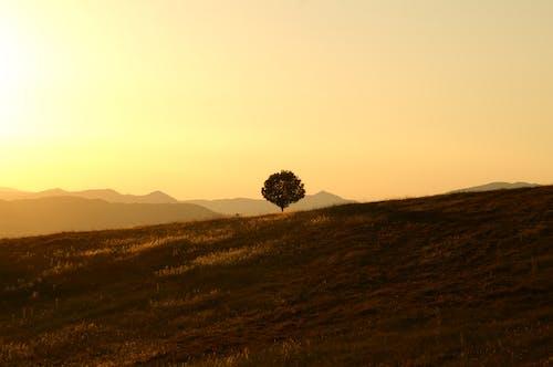 Imagine de stoc gratuită din apus, arbore, cer, deal