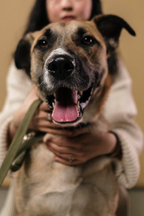 Free stock photo of aid, altruism, animal