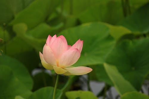 Fotos de stock gratuitas de flor, flora, floración, macro