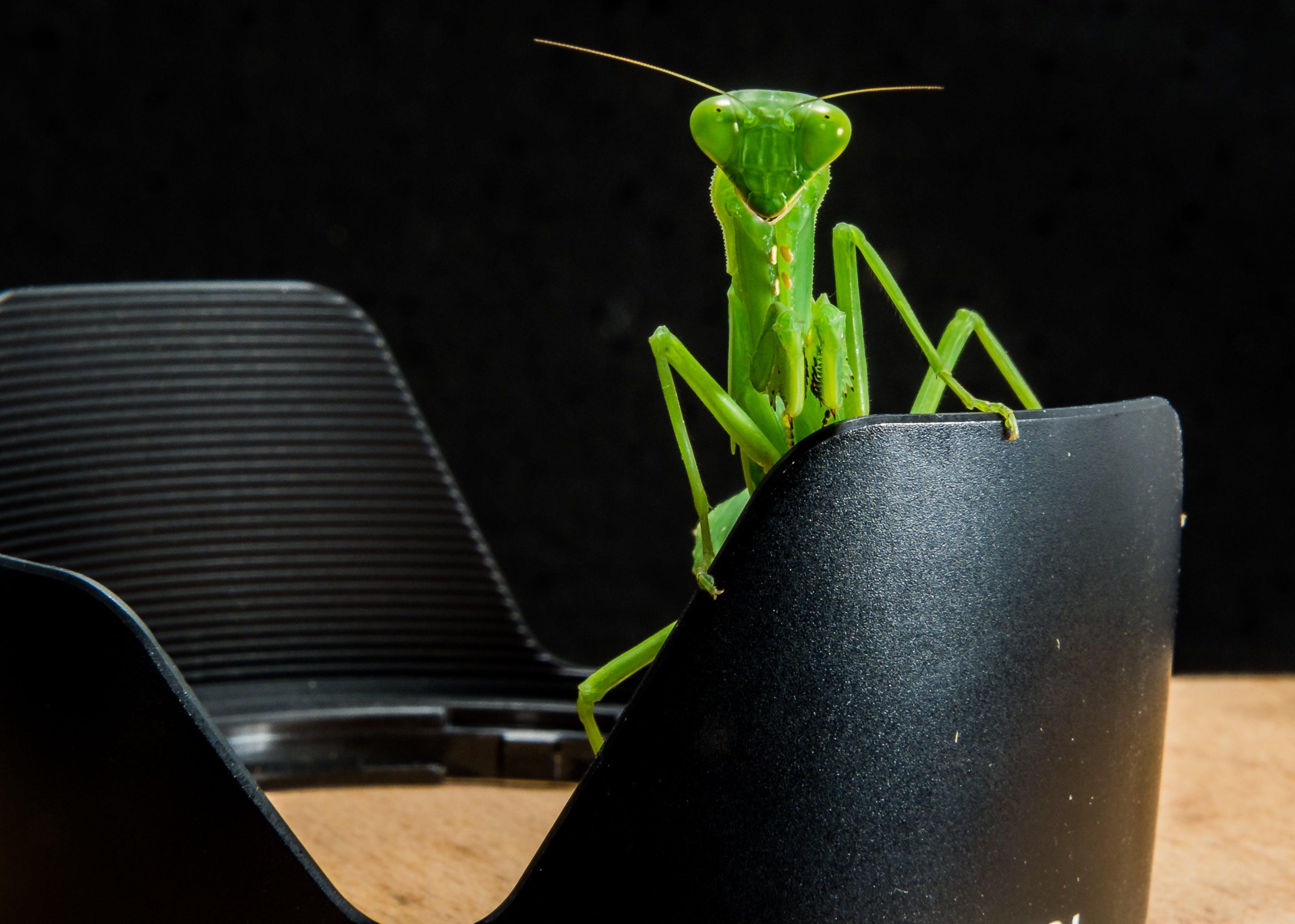 Green Grasshopper on Black Metal