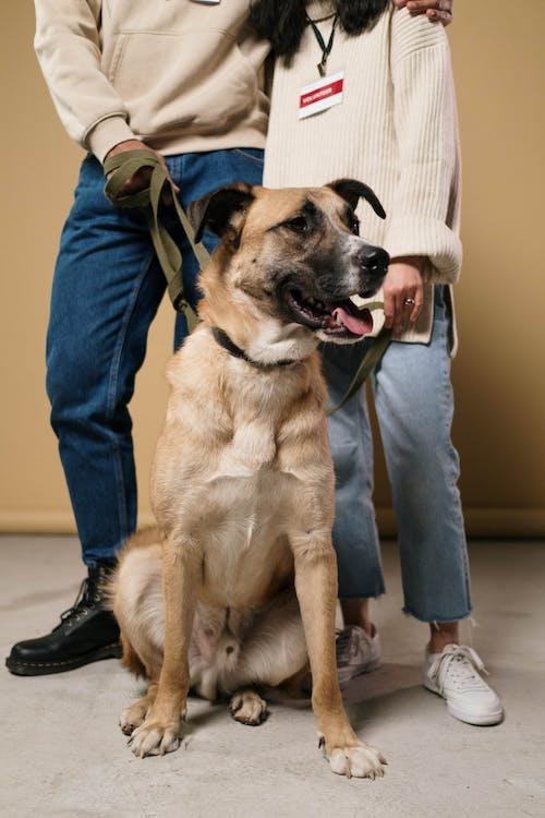 Immagine gratuita di abbracci, addestramento del cane, adulto, affamato
