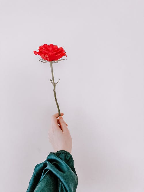 Anonymous woman showing fragrant rose against white wall