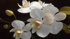 flowers, plant, white