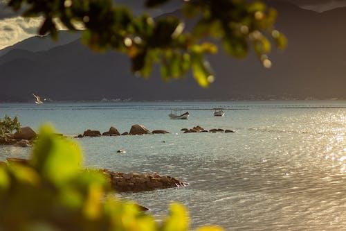 Free stock photo of beach, bird, boats