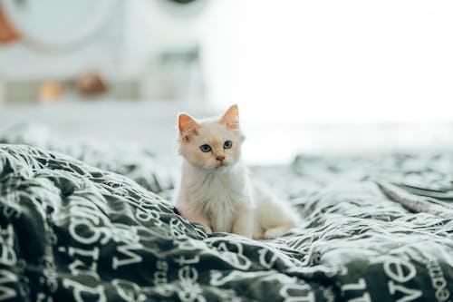 White Cat on White and Black Textile