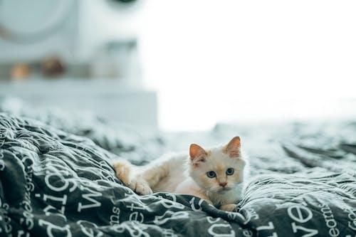 Free stock photo of animal, cat, curiosity, cute