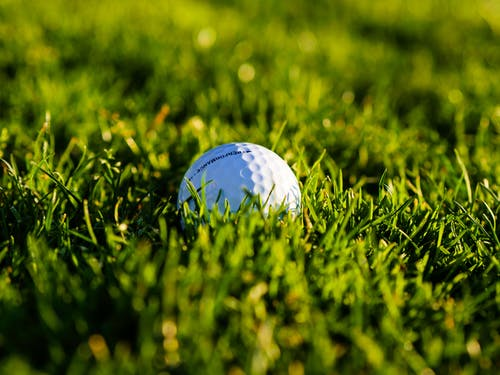 Close Up of a Golf Ball in the Green Grass
