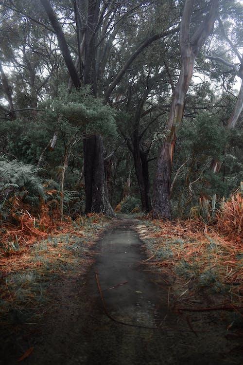 Foto d'estoc gratuïta de a l'aire lliure, arbres, Austràlia