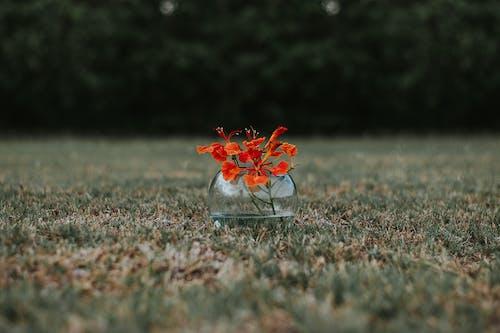 Gratis stockfoto met blad, bloeiende bloemen, bloem