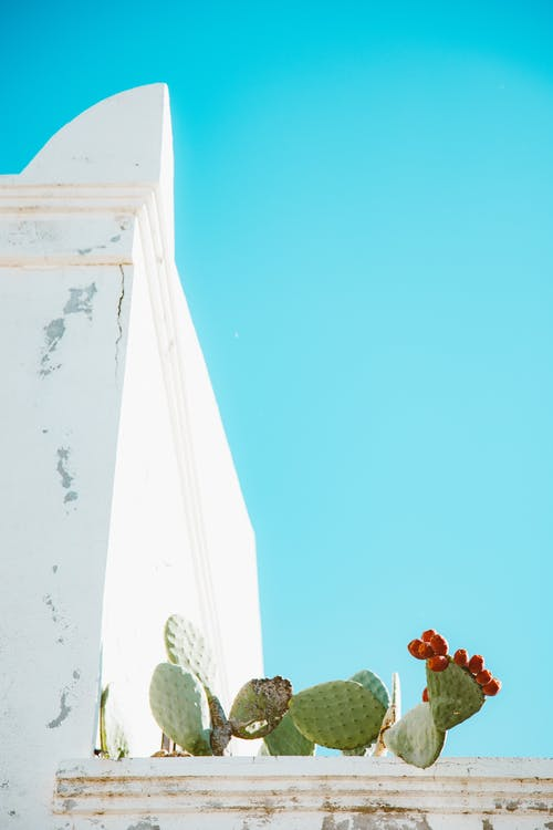 Photos gratuites de cactus, centrale, ciel bleu