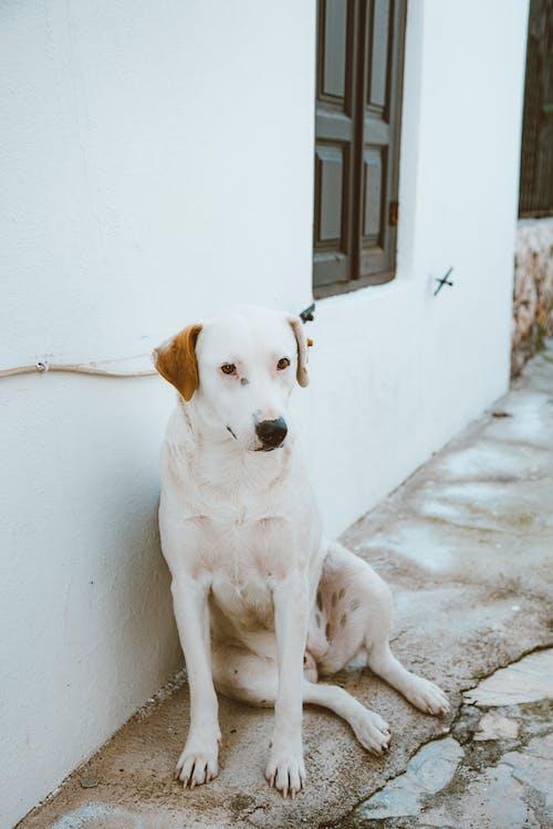 Immagine gratuita di animale, animale domestico, cane