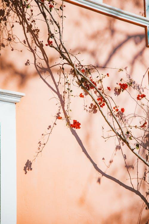 Foto stok gratis bayangan, bunga-bunga, cabang pohon