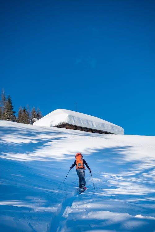 감기, 겨울, 눈, 레저의 무료 스톡 사진