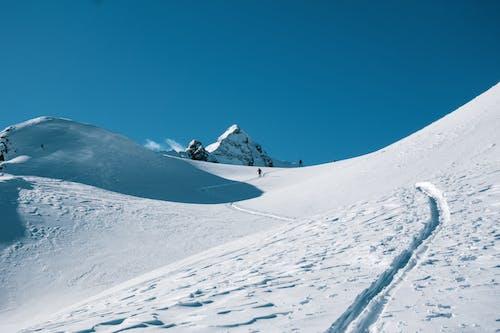 가루, 감기, 겨울, 경치의 무료 스톡 사진