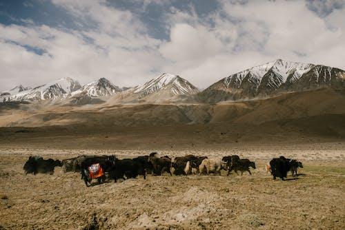 Gratis stockfoto met berg, bergen, bergtocht