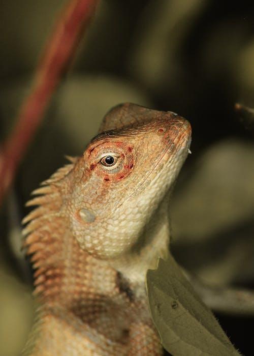 Close Up Shot of an Chameleon