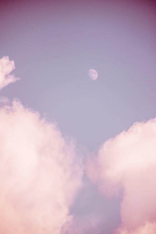 Foto d'estoc gratuïta de cel, foto amb angle baix, fotografia de natura