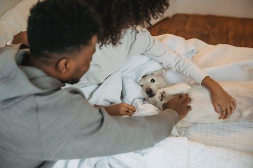 アクバシュ犬, アパート, アフリカ系アメリカ人の無料の写真素材