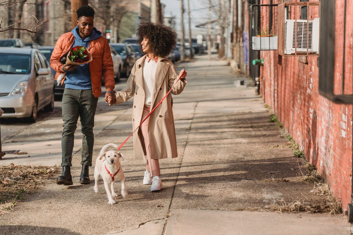 Full body of African American man and woman on date holding hands walking on pavement with cute dog